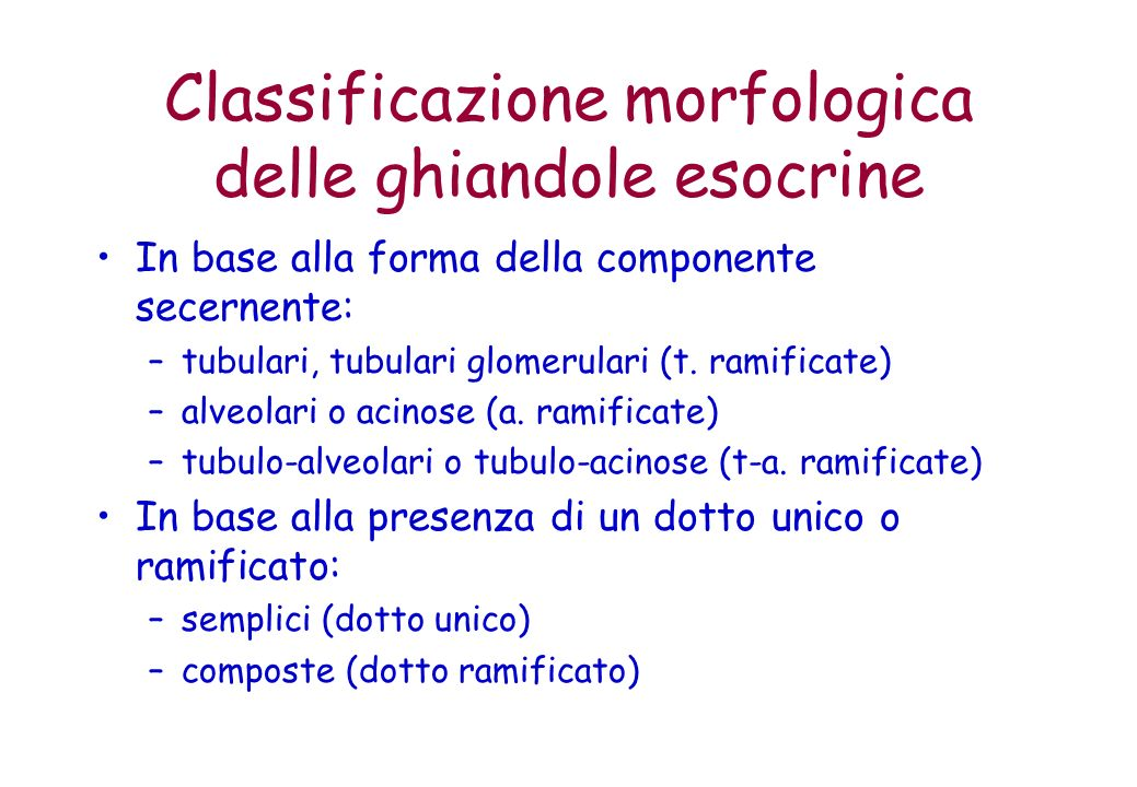 Classificazione morfologica delle ghiandole esocrine