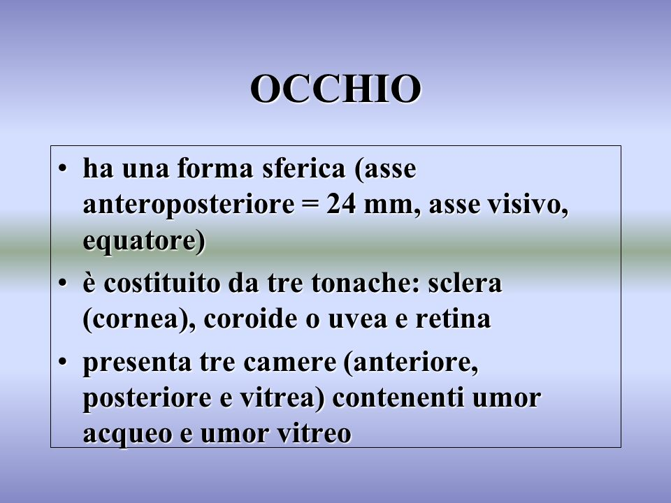 OCCHIO ha una forma sferica (asse anteroposteriore = 24 mm, asse visivo, equatore)