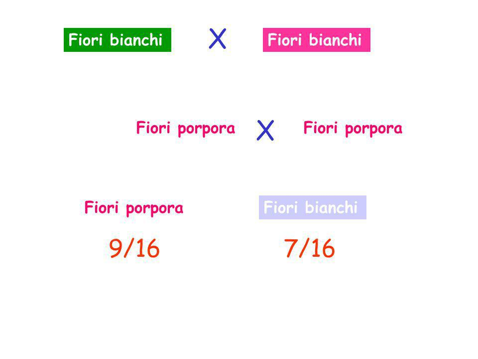 X X 9/16 7/16 Fiori bianchi Fiori bianchi Fiori porpora Fiori porpora
