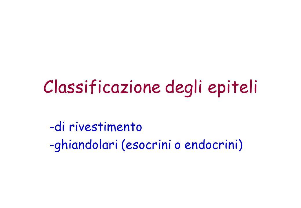 Classificazione degli epiteli