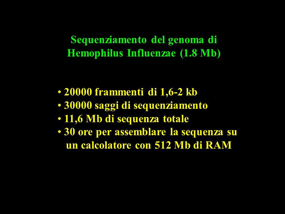 Sequenziamento del genoma di Hemophilus Influenzae (1.8 Mb)