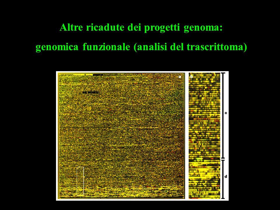 Altre ricadute dei progetti genoma:
