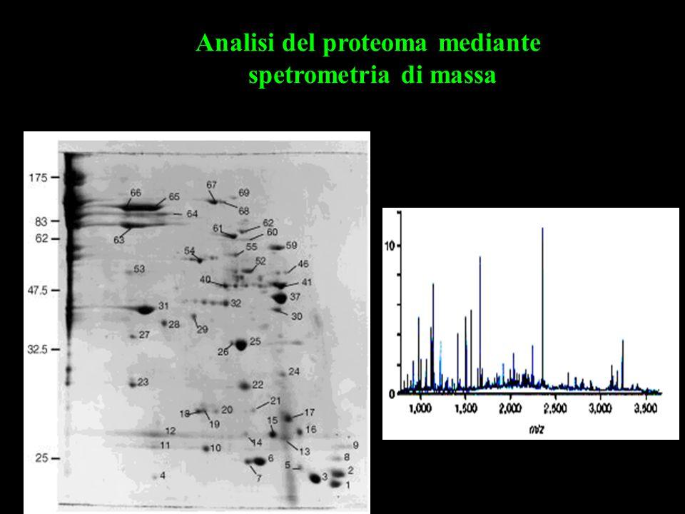 Analisi del proteoma mediante