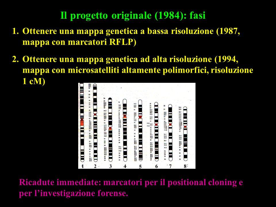 Il progetto originale (1984): fasi