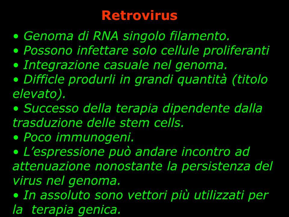 Retrovirus Genoma di RNA singolo filamento.