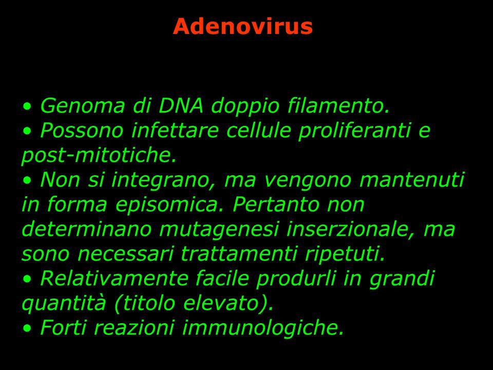 Adenovirus Genoma di DNA doppio filamento.