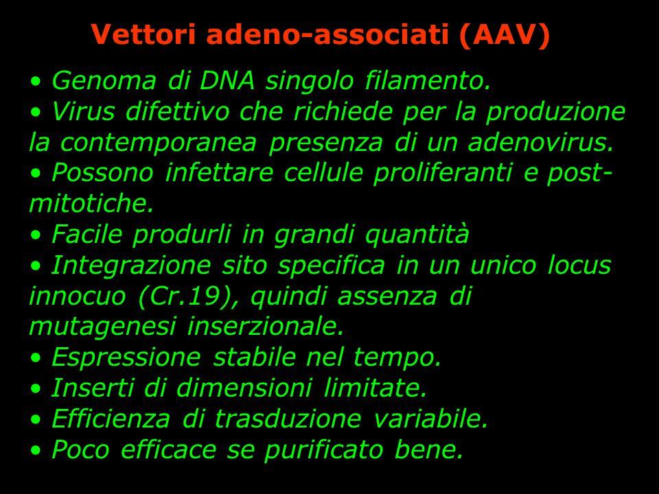 Vettori adeno-associati (AAV)