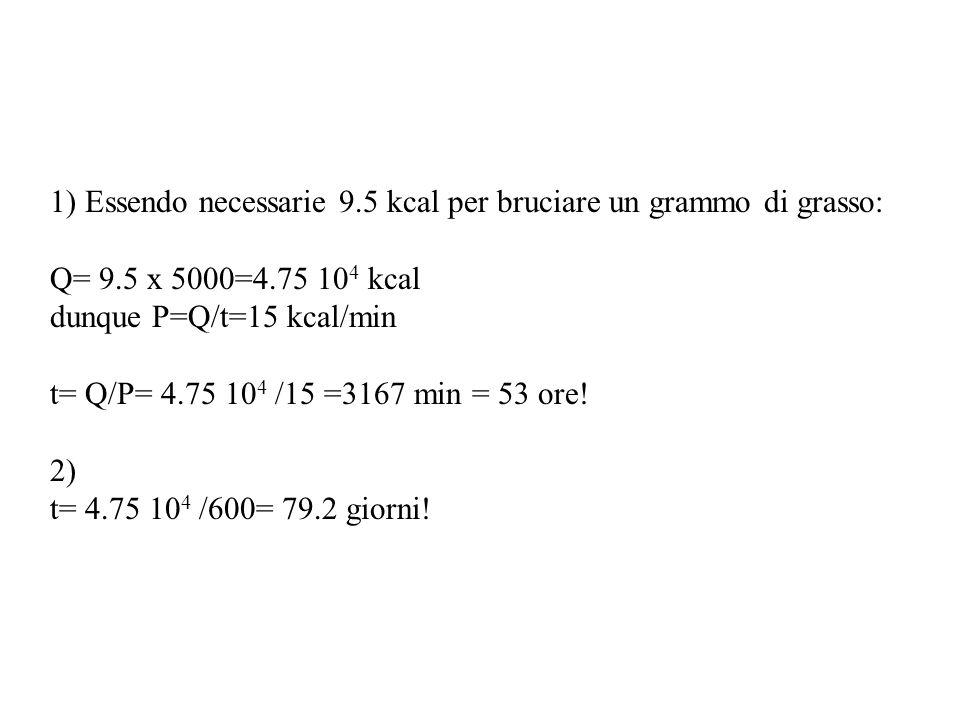 1) Essendo necessarie 9.5 kcal per bruciare un grammo di grasso: