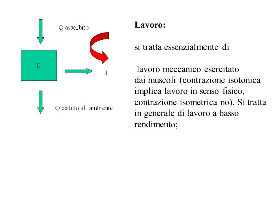 Lavoro: si tratta essenzialmente di. lavoro meccanico esercitato. dai muscoli (contrazione isotonica.