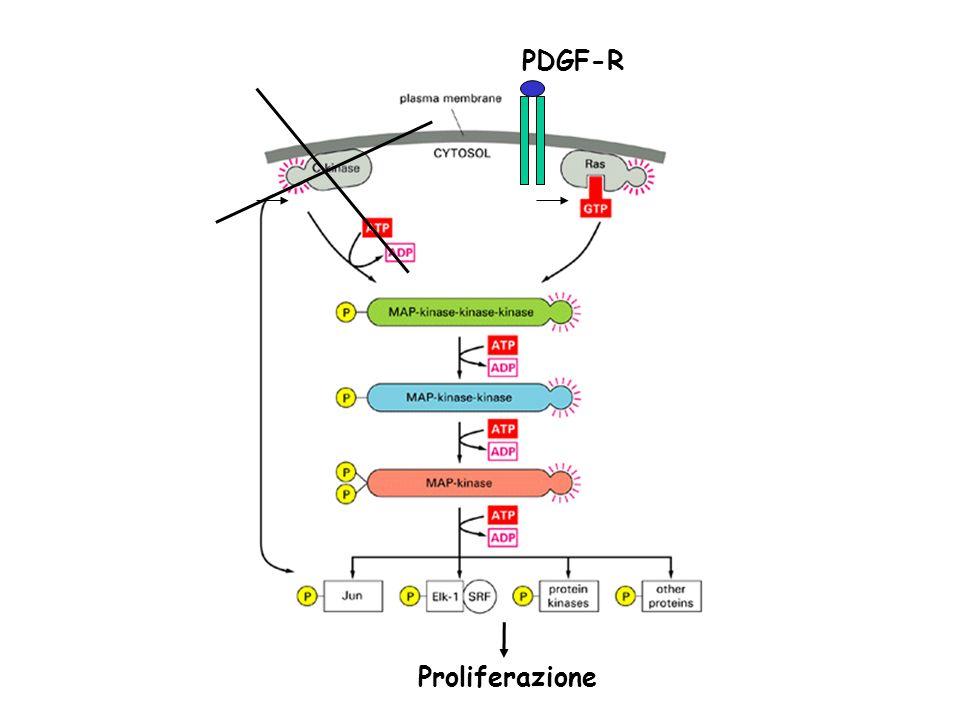 PDGF-R Proliferazione