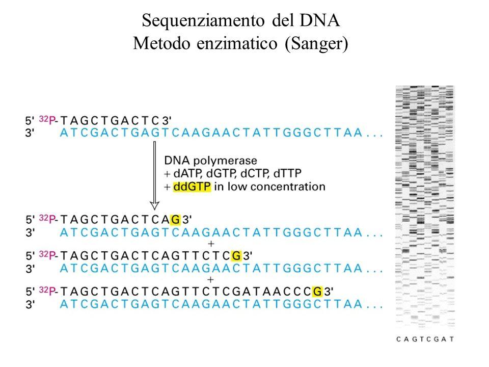 Sequenziamento del DNA Metodo enzimatico (Sanger)