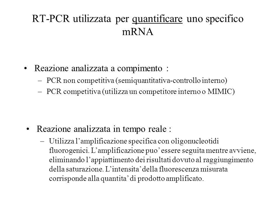 RT-PCR utilizzata per quantificare uno specifico mRNA