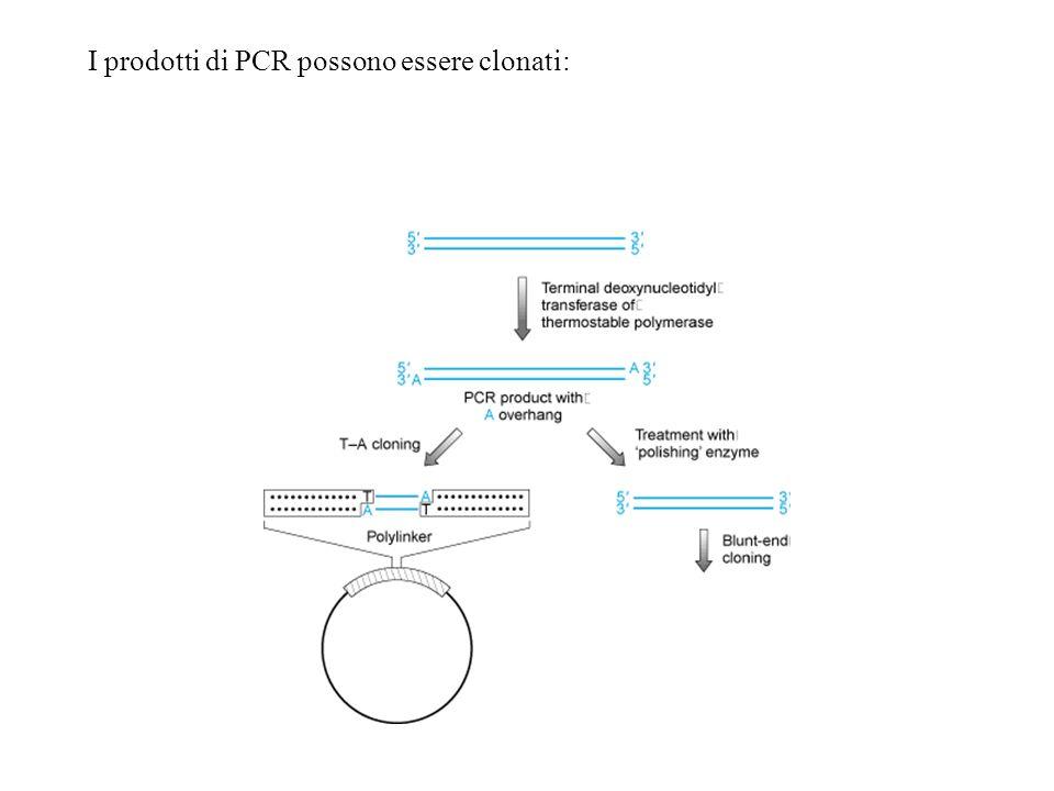 I prodotti di PCR possono essere clonati:
