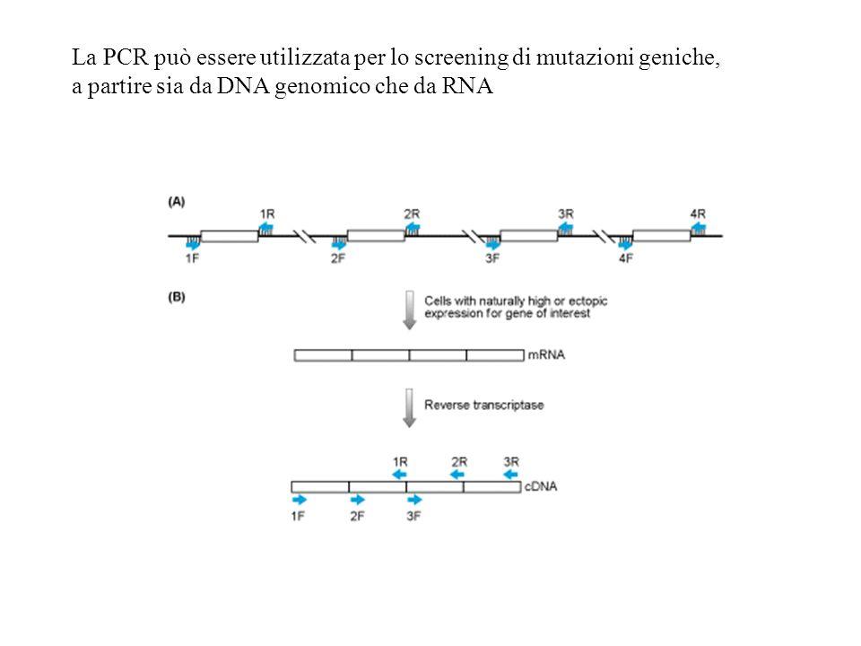 La PCR può essere utilizzata per lo screening di mutazioni geniche,