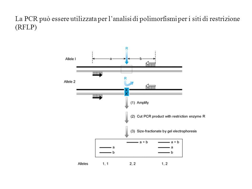 La PCR può essere utilizzata per l'analisi di polimorfismi per i siti di restrizione