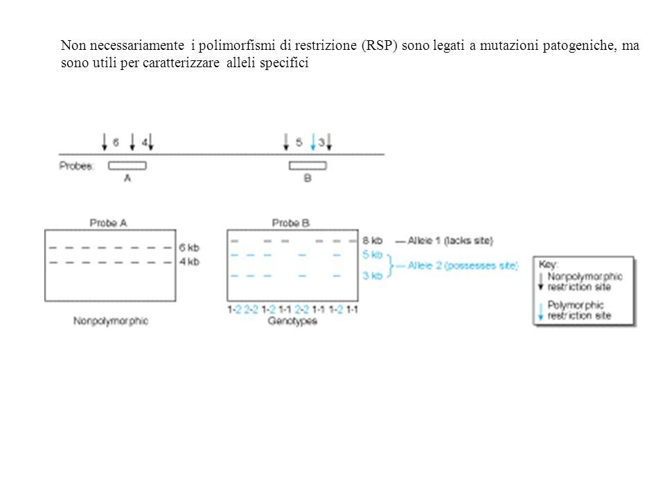 Non necessariamente i polimorfismi di restrizione (RSP) sono legati a mutazioni patogeniche, ma