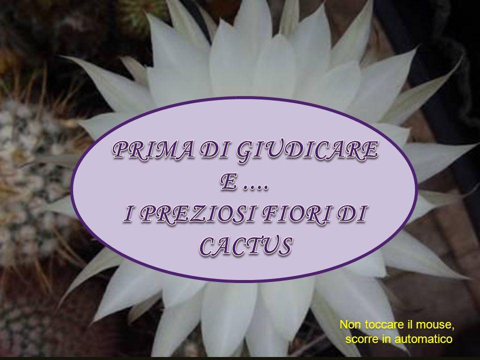 I PREZIOSI FIORI DI CACTUS