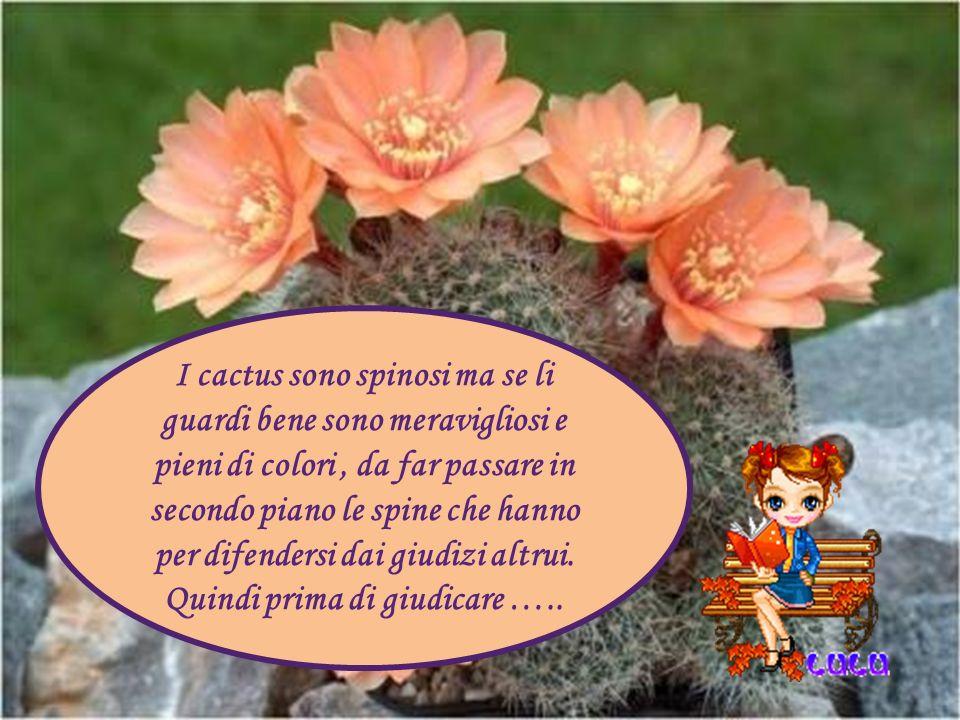 I cactus sono spinosi ma se li guardi bene sono meravigliosi e pieni di colori , da far passare in secondo piano le spine che hanno per difendersi dai giudizi altrui.