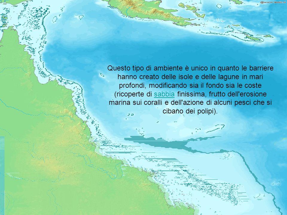 Questo tipo di ambiente è unico in quanto le barriere hanno creato delle isole e delle lagune in mari profondi, modificando sia il fondo sia le coste (ricoperte di sabbia finissima, frutto dell erosione marina sui coralli e dell azione di alcuni pesci che si cibano dei polipi).