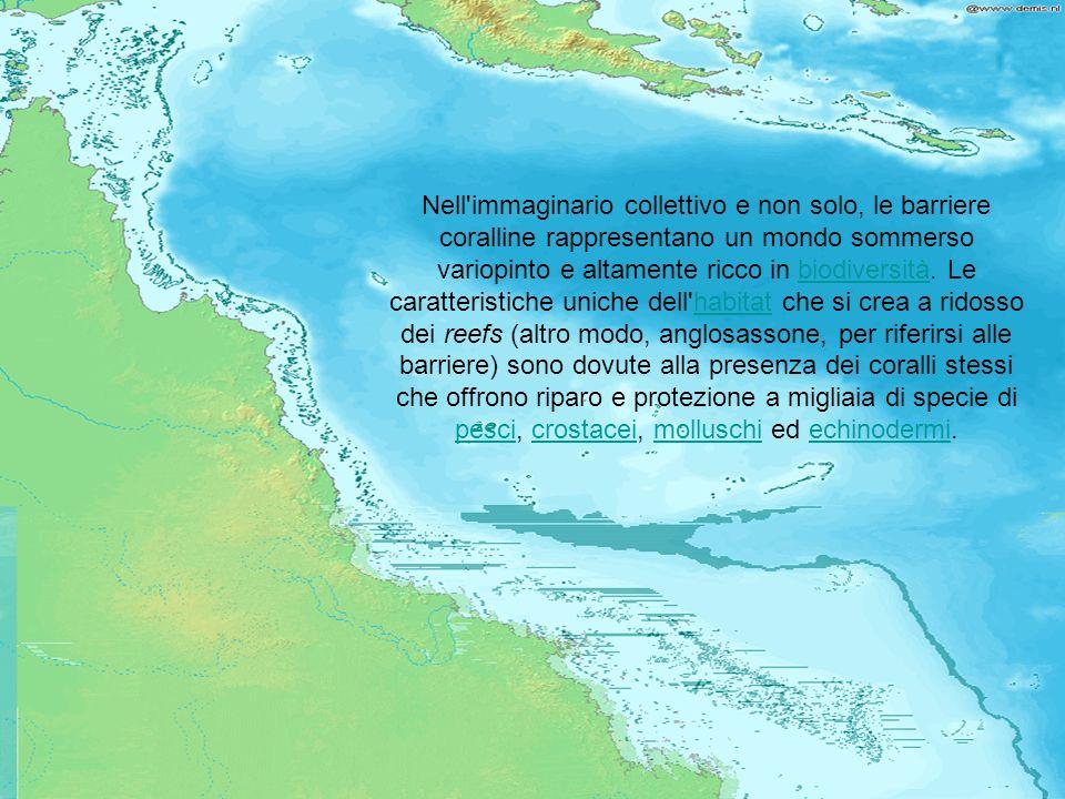 Nell immaginario collettivo e non solo, le barriere coralline rappresentano un mondo sommerso variopinto e altamente ricco in biodiversità.