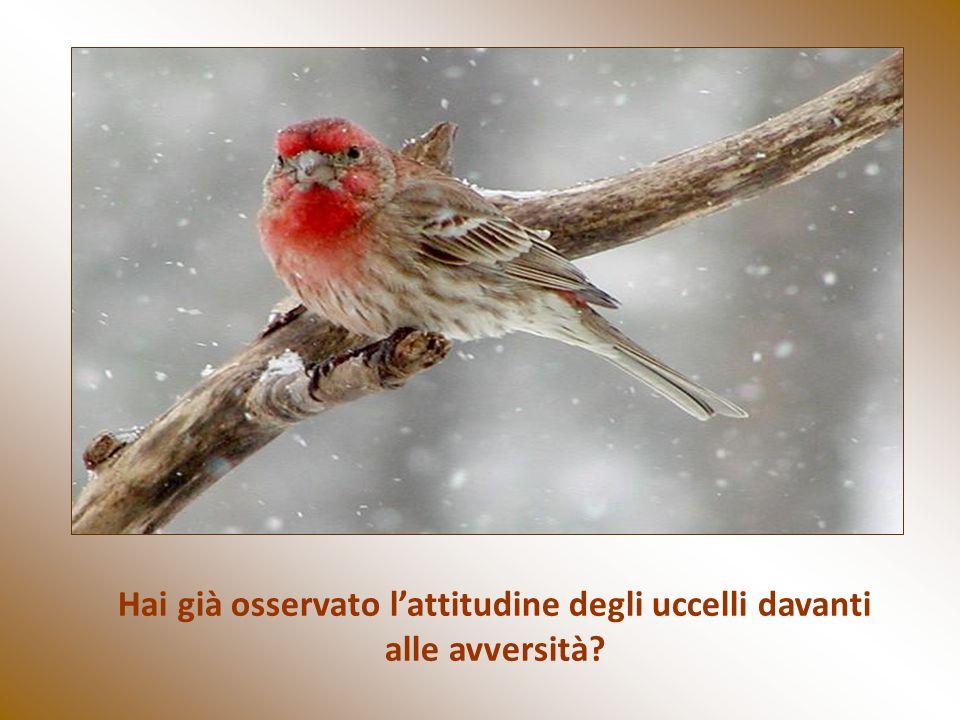 Hai già osservato l'attitudine degli uccelli davanti alle avversità
