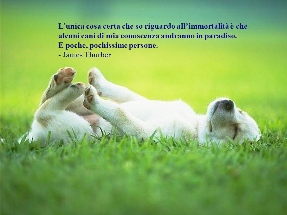 L'unica cosa certa che so riguardo all'immortalità è che alcuni cani di mia conoscenza andranno in paradiso.
