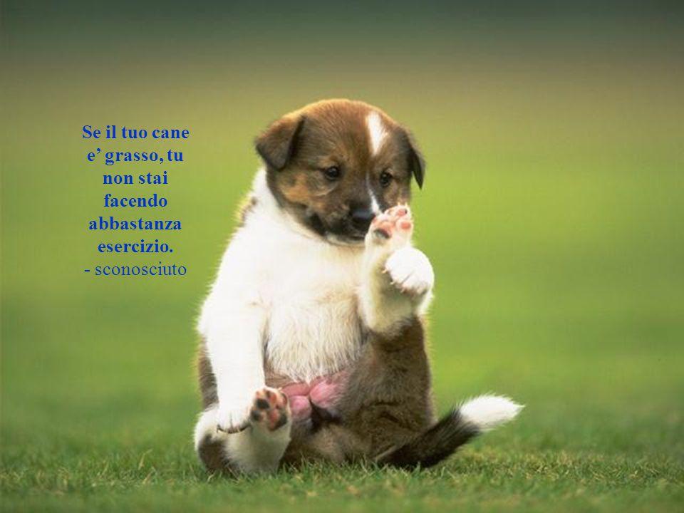 Se il tuo cane e' grasso, tu non stai facendo abbastanza esercizio.