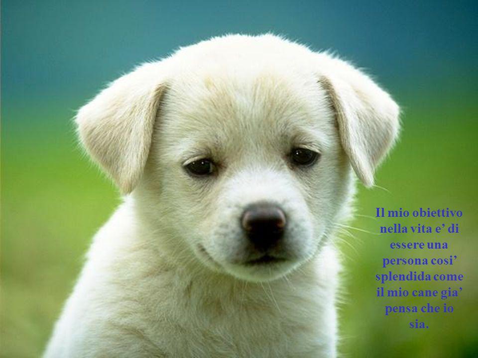 Il mio obiettivo nella vita e' di essere una persona cosi' splendida come il mio cane gia' pensa che io sia.