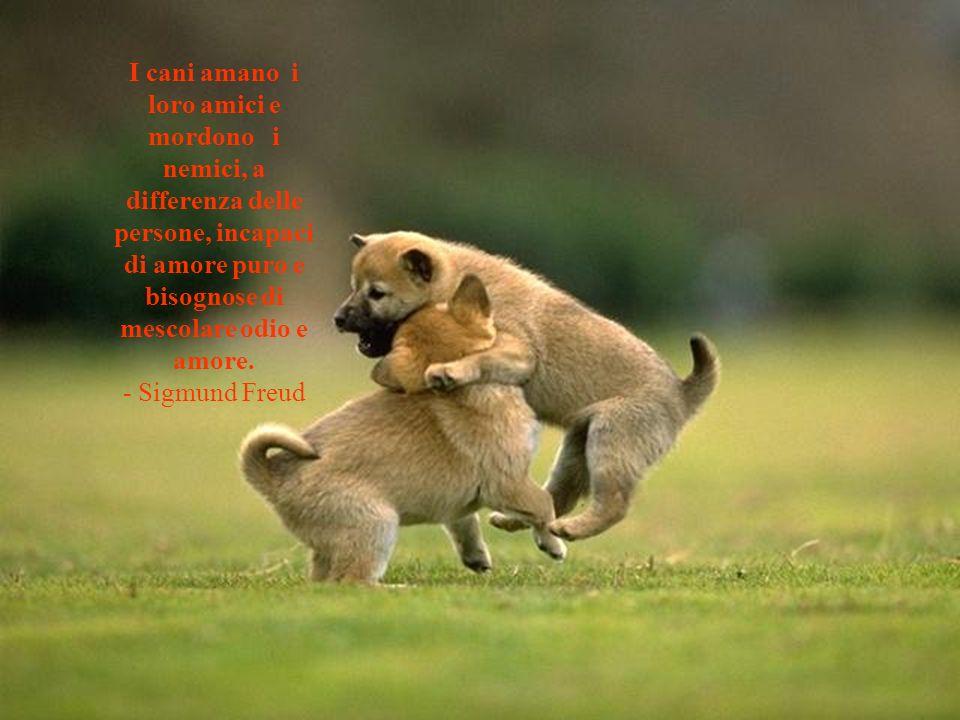 I cani amano i loro amici e mordono i nemici, a differenza delle persone, incapaci di amore puro e bisognose di mescolare odio e amore.