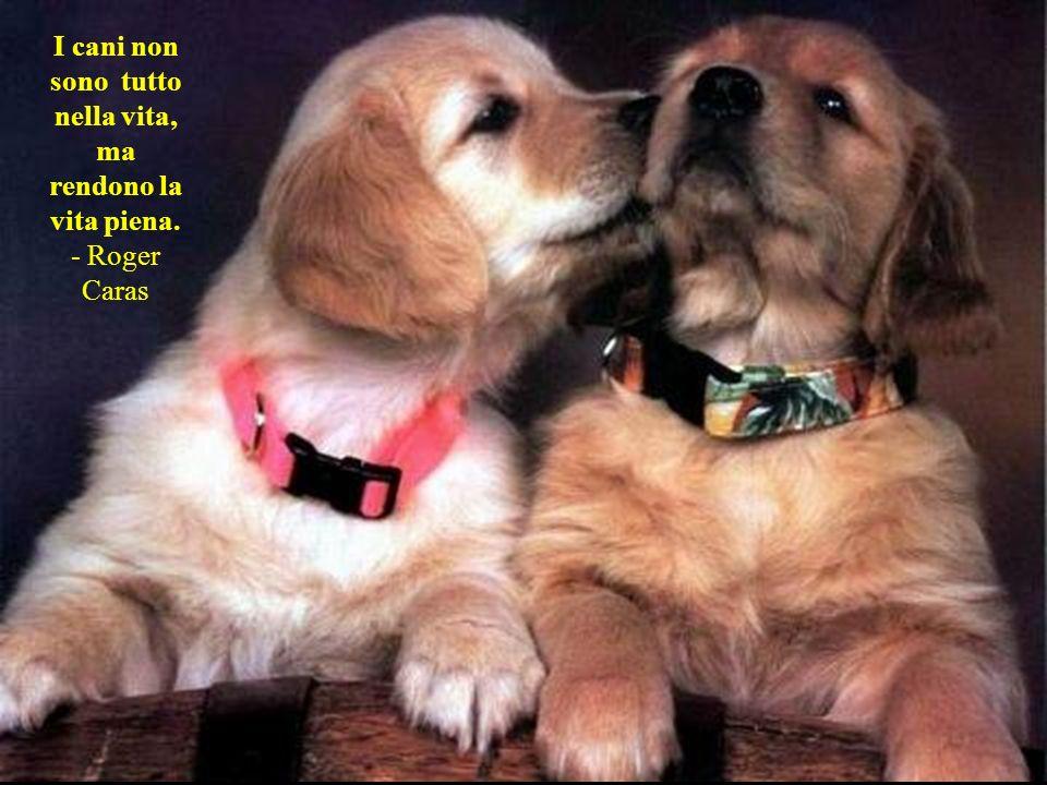 I cani non sono tutto nella vita, ma rendono la vita piena.