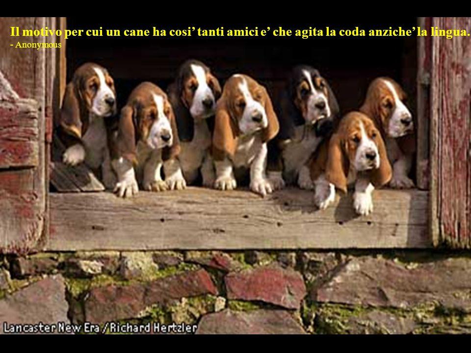 Il motivo per cui un cane ha cosi' tanti amici e' che agita la coda anziche' la lingua.
