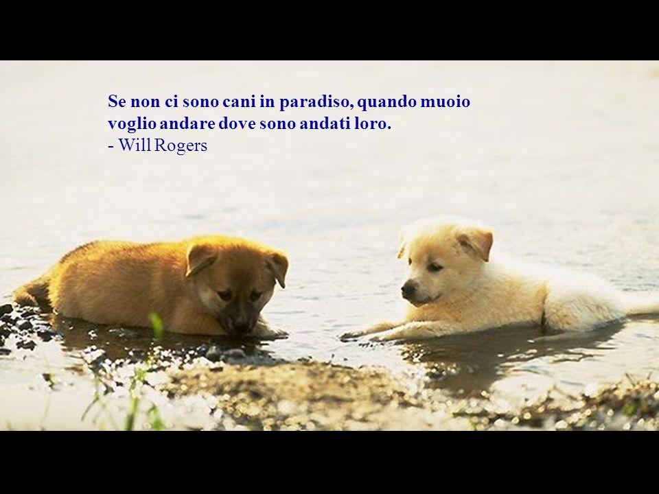 Se non ci sono cani in paradiso, quando muoio