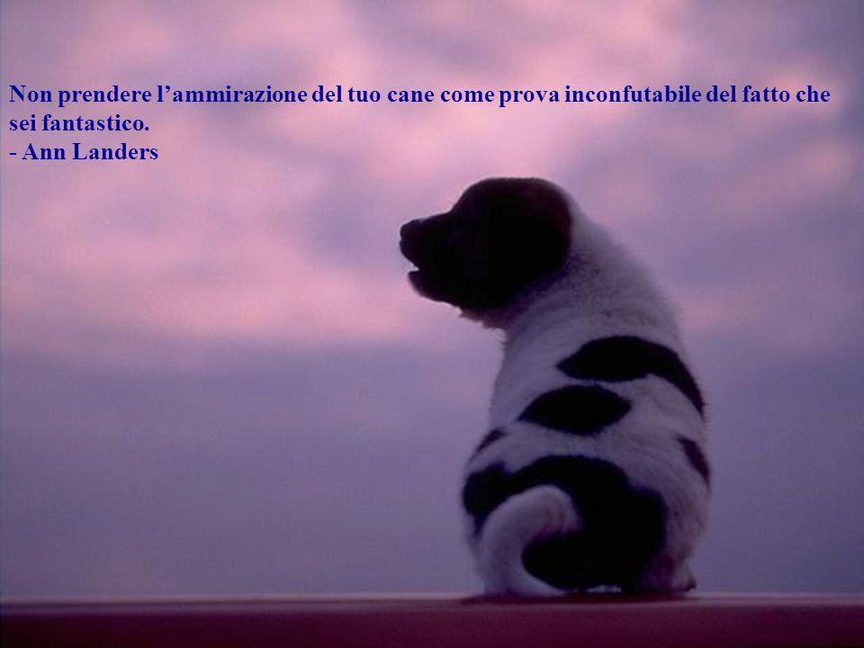 Non prendere l'ammirazione del tuo cane come prova inconfutabile del fatto che sei fantastico.