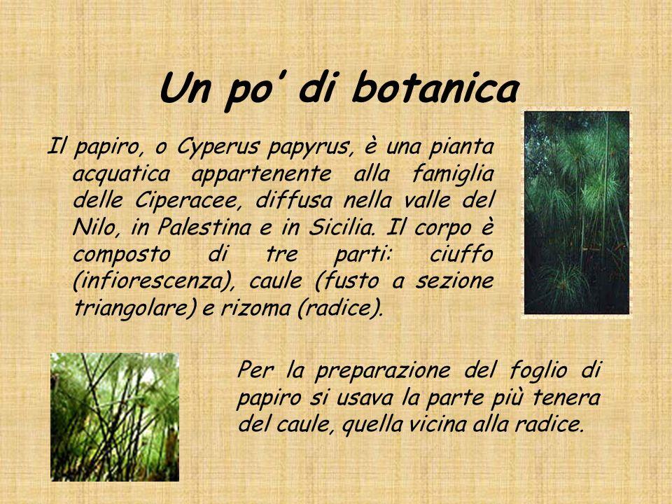 Un po' di botanica