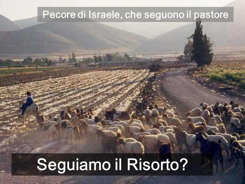 Pecore di Israele, che seguono il pastore