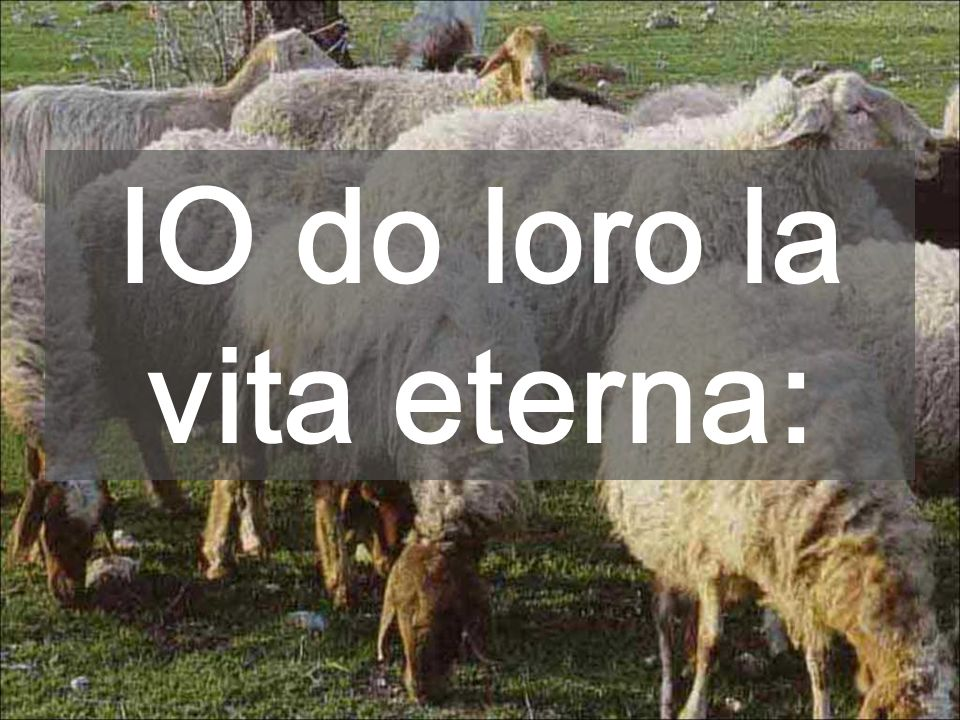 IO do loro la vita eterna :