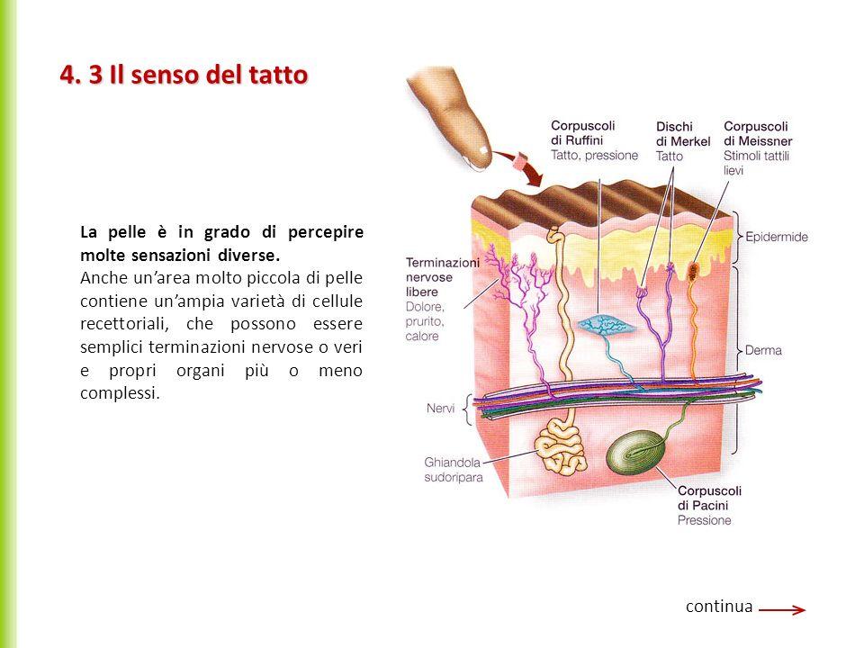 4. 3 Il senso del tatto La pelle è in grado di percepire molte sensazioni diverse.