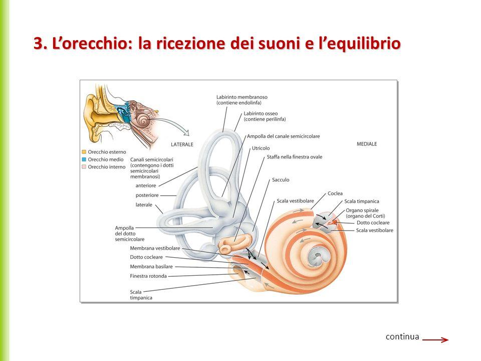 3. L'orecchio: la ricezione dei suoni e l'equilibrio