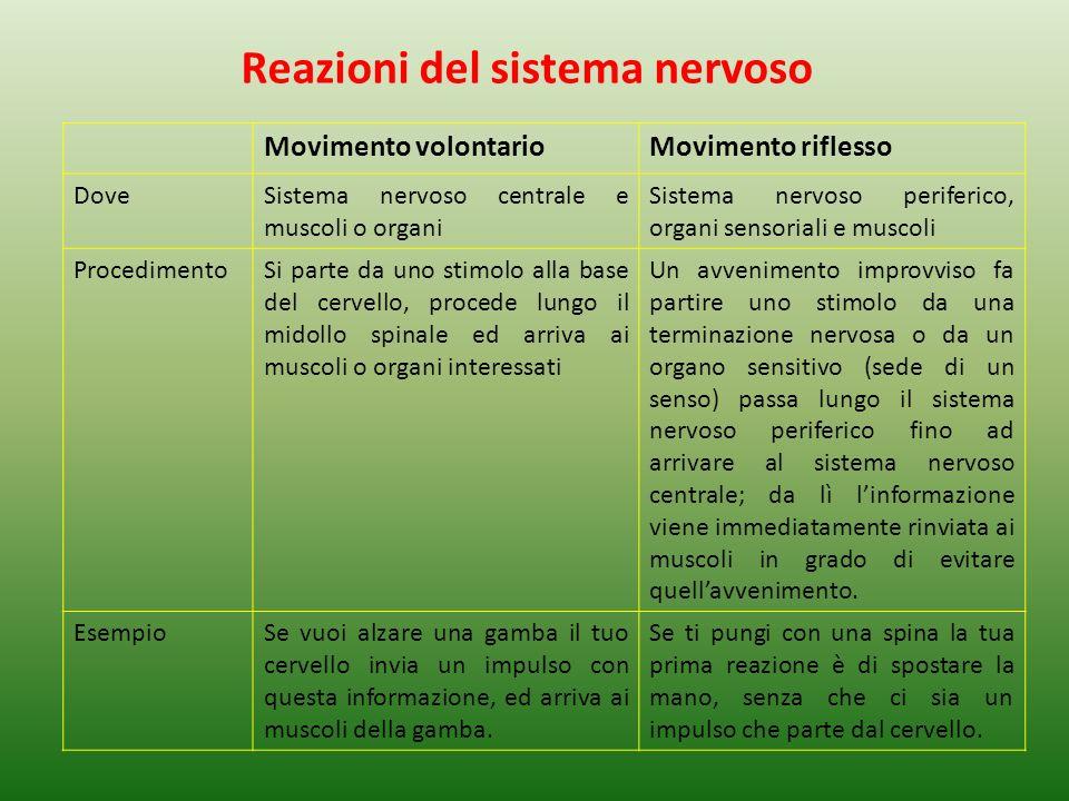 Reazioni del sistema nervoso