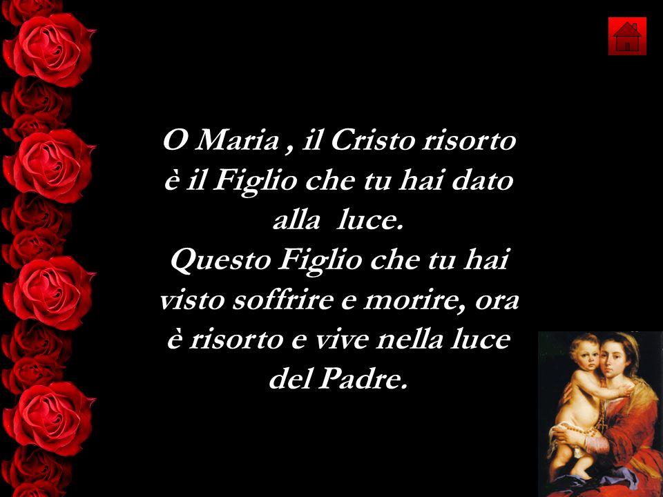 O Maria , il Cristo risorto è il Figlio che tu hai dato alla luce