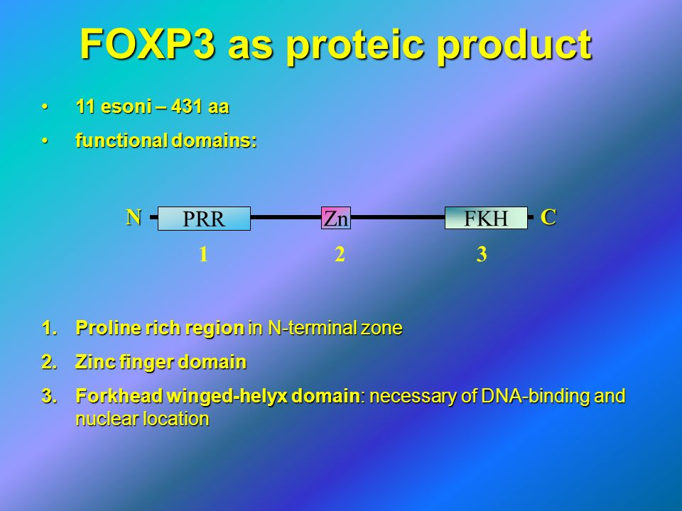 FOXP3 as proteic product