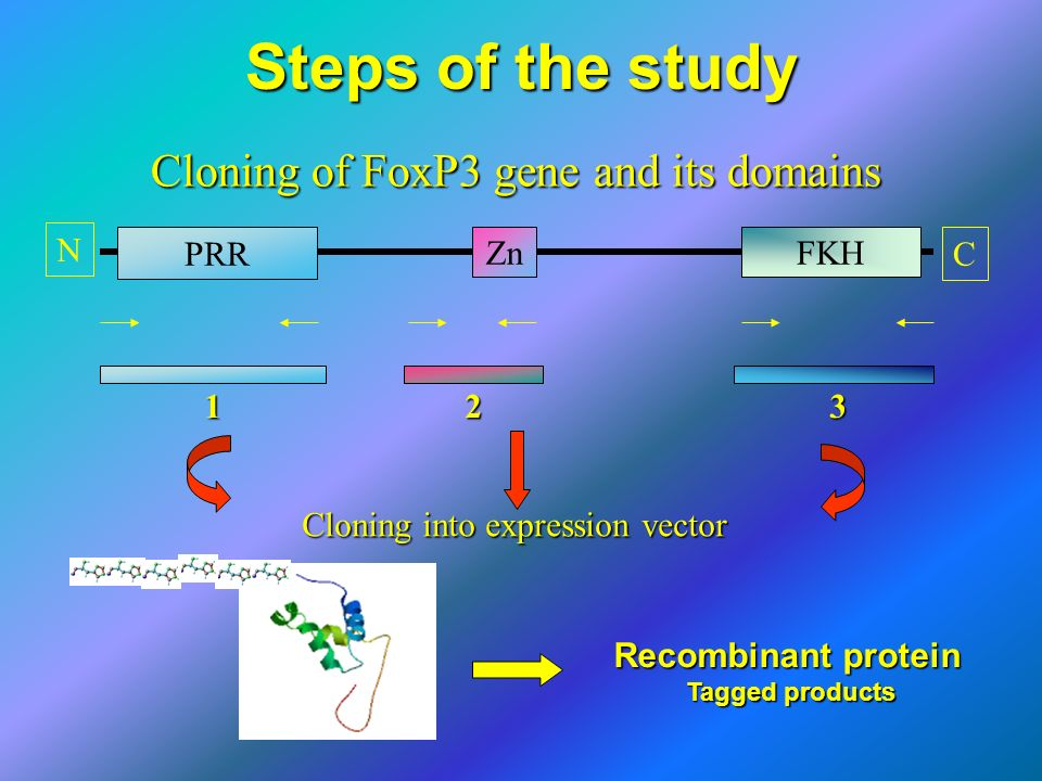 Cloning of FoxP3 gene and its domains