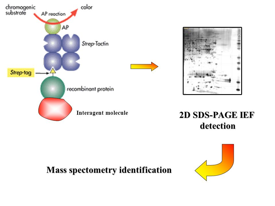 Mass spectometry identification
