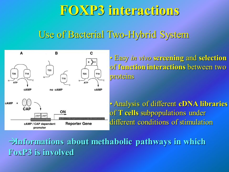 Use of Bacterial Two-Hybrid System