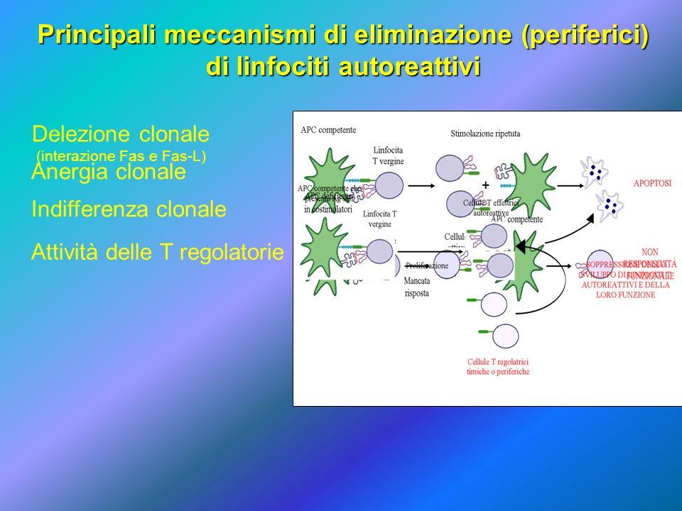 Principali meccanismi di eliminazione (periferici)