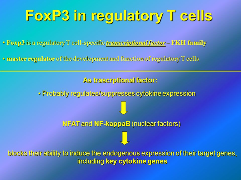 FoxP3 in regulatory T cells