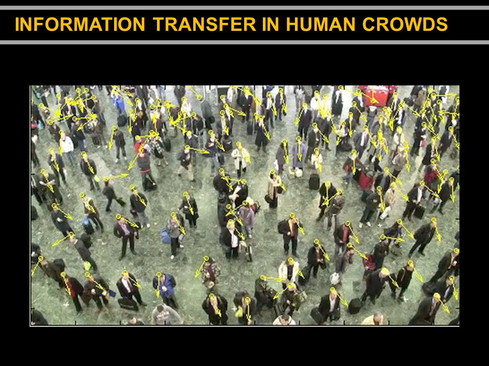 INFORMATION TRANSFER IN HUMAN CROWDS
