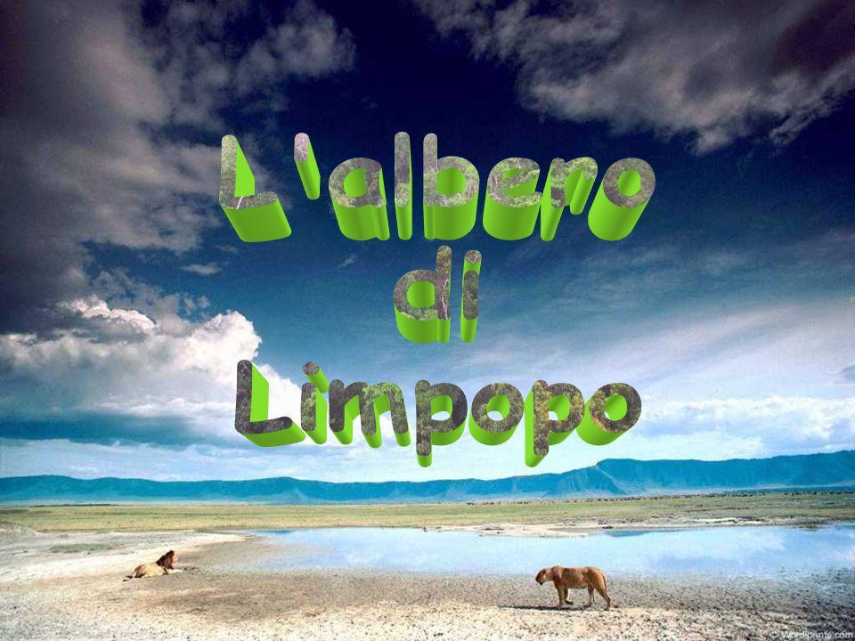 L albero di Limpopo