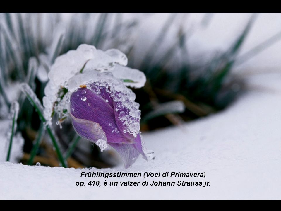 Frühlingsstimmen (Voci di Primavera) op