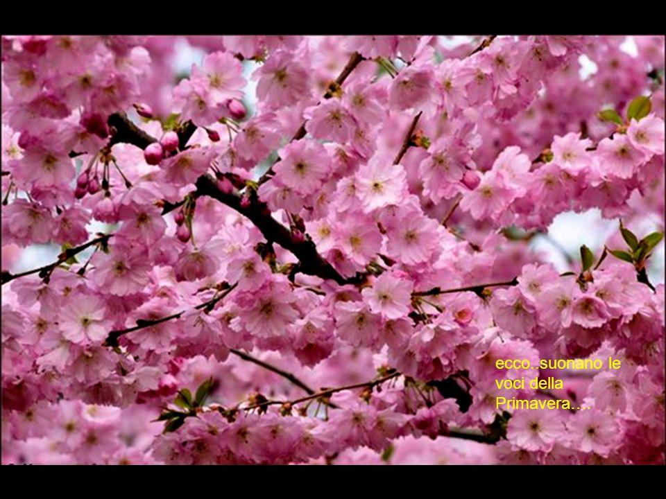 ecco..suonano le voci della Primavera….